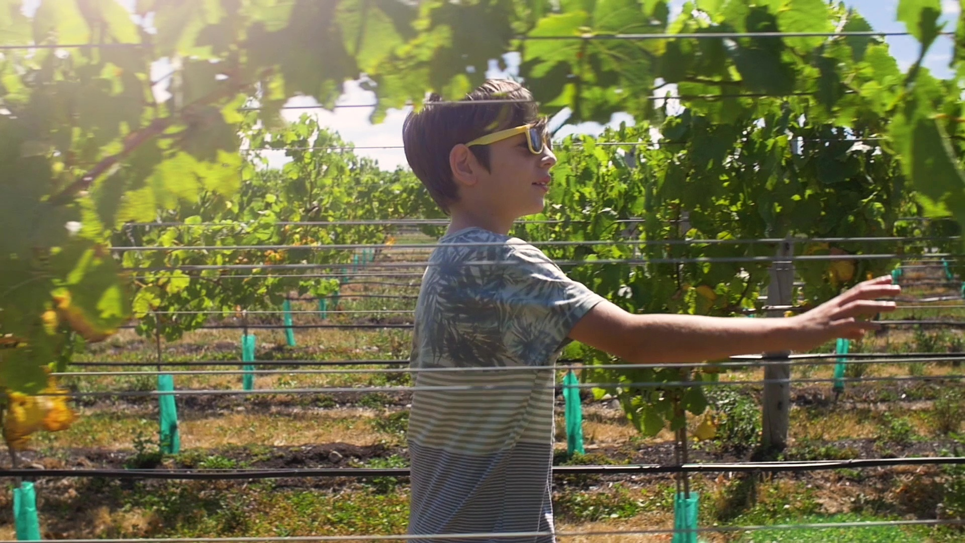 Schoolhouse Rocked Teaser Trailer - Boy in a vineyard